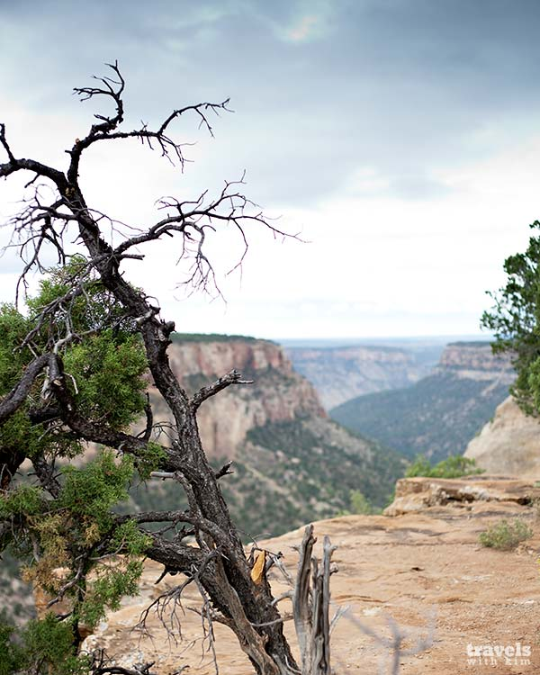 Mesa Verde – the Best of the Rest – Photo Gallery