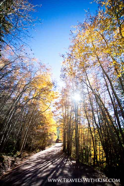 Fall Leaves along Boreas Pass Road – Colorado